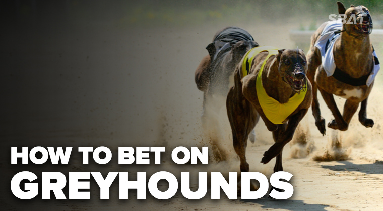 dog racing betting explained that